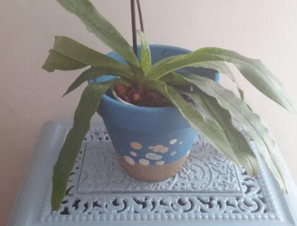 Pot de fleurs en terre cuite decores